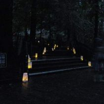 Luminarias illuminate Muir Woods paths after dark. Photo by Frog Mom