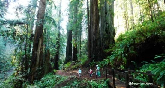 P1060081 Redwoods 1
