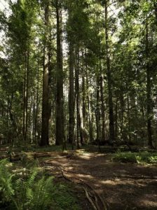hendy woods