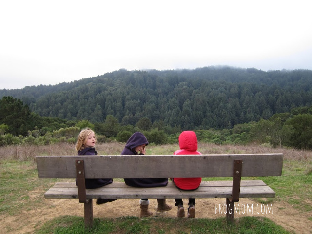 Bench on top of hill, Redwood Regional Park
