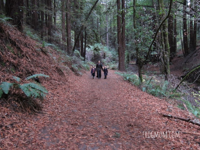 Trail in the redwoods, Redwood Regional Park