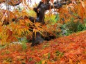Fall maples in November. Photo by Frog Mom