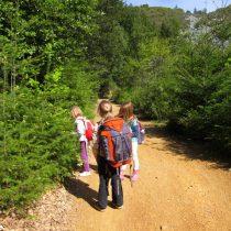 Harvesting douglas fir tips