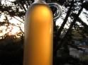 Douglas fir tip syrup