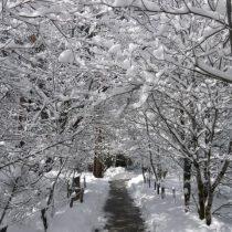 Winter corridor
