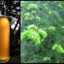 Douglas fir syrup