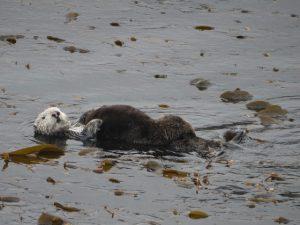 Sea otter mom