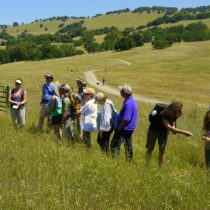 Culinary hike on Mt Burdell