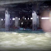Under Muni Pier swimmers