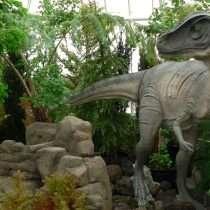 Dinosaurs at the Conservatory. Photo by Nina Sazevich