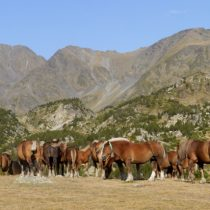 Horses grazing in the Pyrenees