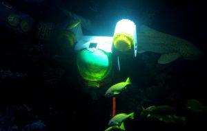 Atlantis Underwater Adventure