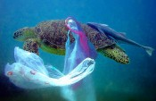 Of the 1 billion plastic bags distributed every day on our planet, 0.2 to 0.3 percent — millions, in other words —  end up in the ocean. Bags, along with other forms of plastic, float on the surface, where they're often mistaken for food by turtles, birds and other marine life. Courtesy of The Kind Life