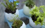Teeny tiny gardening eggshell planters. From Emma Hardy's book, Teeny Tiny Gardens (Cico Books)
