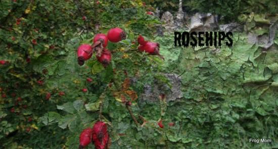 IMG_1661 Rosehips
