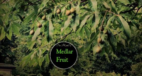 IMG_1688 Medlar Fruit