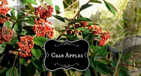 P1320232 Crab Apples