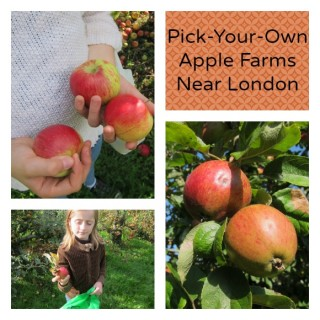 PicMonkey Collage where to pick apples