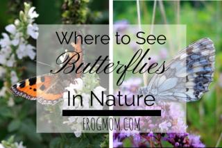 Butterflies cover
