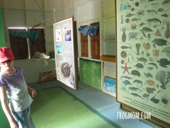 Family Volunteering for Sea Turtles in THailand - Lions Village Community Center