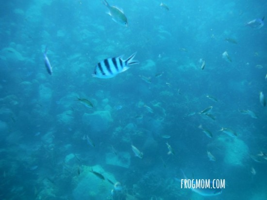 Snorkeling with children in Thailand | A Live Aquarium