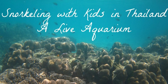 Snorkeling with Kids in Thailand | A Live Aquarium