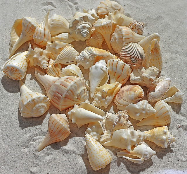 Things to do at the beach with kids - Sea Shell Art