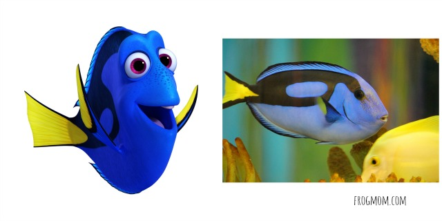 Real Ocean Animals in Finding Dory - Blue Tang