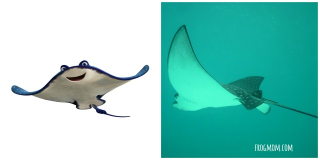 Real Ocean Animals in Finding Dory - Eagle Rays