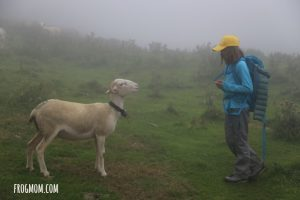 Hiking in the Pyrenees - Sheep
