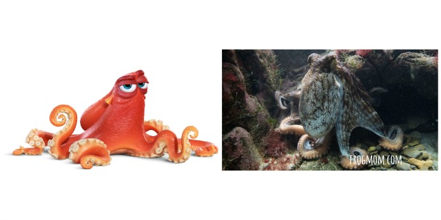 Real Ocean Animals in Finding Dory - Octopus