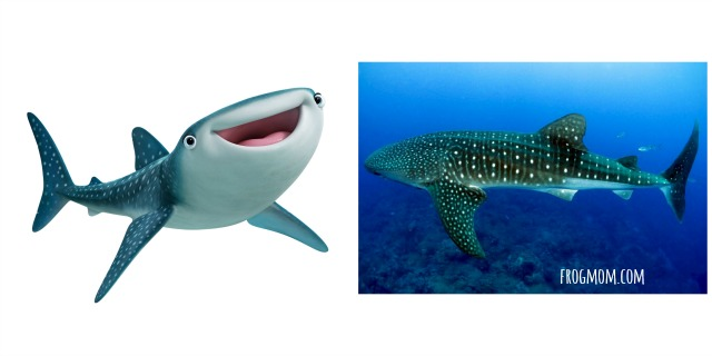 Real Ocean Animals in Finding Dory - Whale Shark