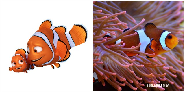 Real Ocean Animals in Finding Dory - Clown Fish