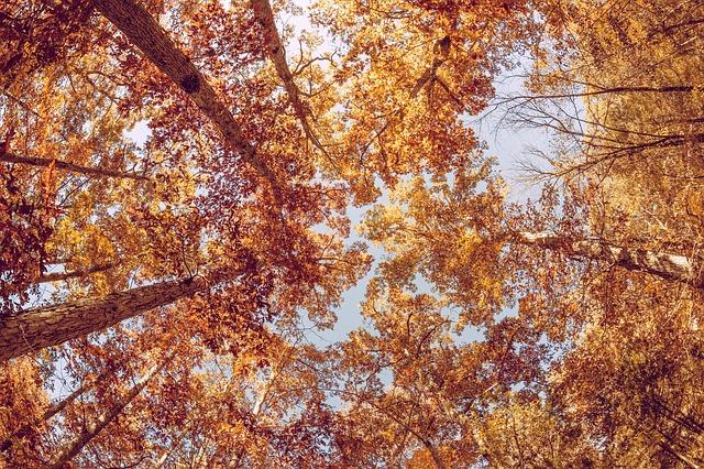 Family Fun Fall Activities - Fall Foliage