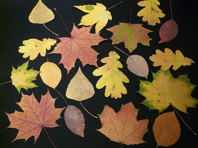 fall-leaves-63221_640 (1)