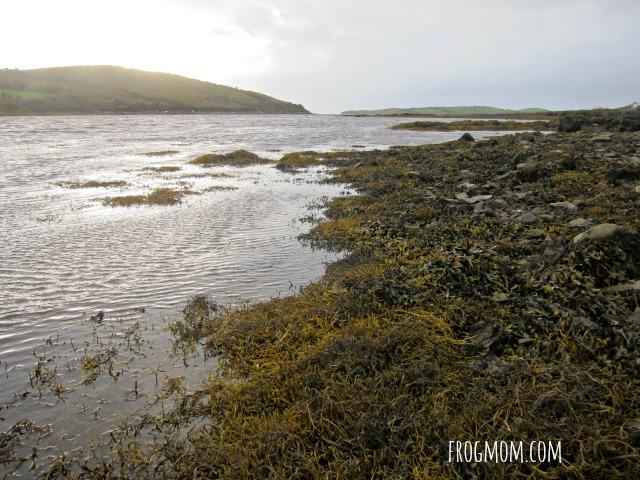Pirate Queen of Ireland - Low tide at Rockfleet