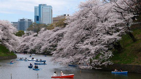 Hanami boat picnic