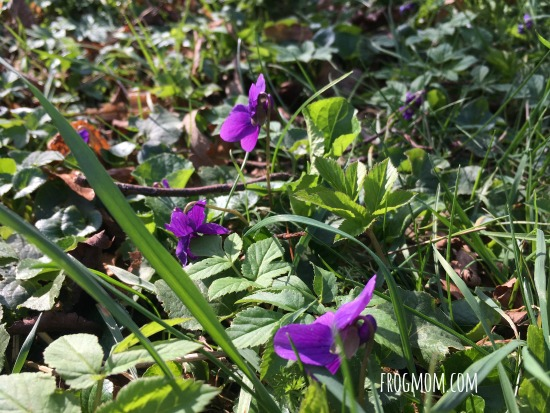 Spring Wildflowers Lemonade Recipe