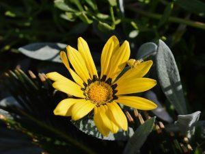 Wildflower Adaptation