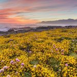 How Kids can study Wildflower Adaptation on the Trail