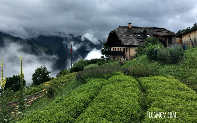 Swiss garden in the mountains