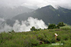 Swiss garden in the mountain