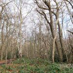 Chislehurst Woods and Cave Hike with Children