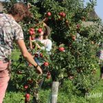 Broomfield Apple Farm: A London Day Out by Train