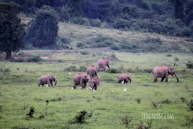 Herd of wild elephants, Kui Buri National Park, Thailand