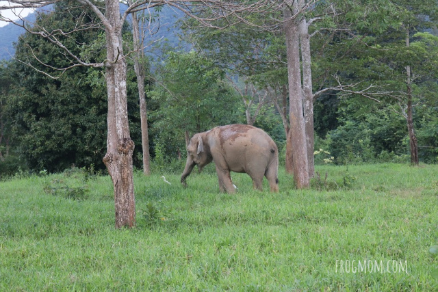 Wild elephant in the forest, Kui Buri National Park, Thailand