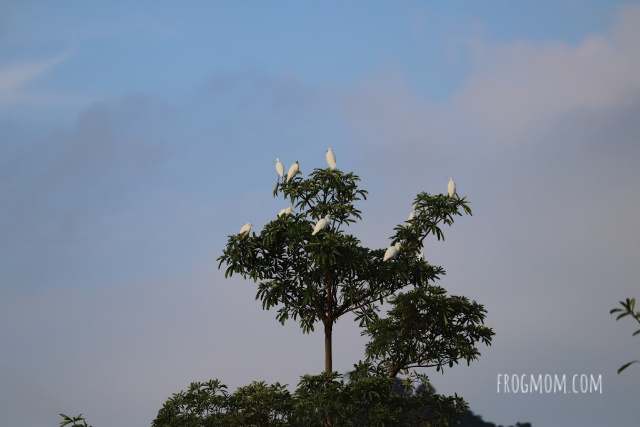 Tree with elephant birds, Kui Buri National Park, Thailand