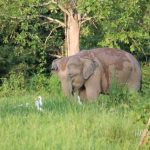 Kui Buri National Park: Where Wild Elephants Roam Free