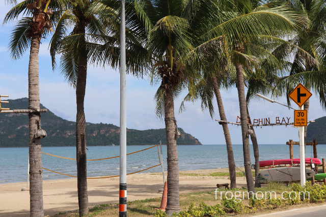 Coconut trees on Dolphin Bay beach, Thailand