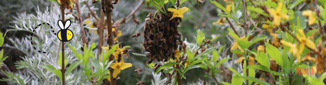 Swarm of wild bees